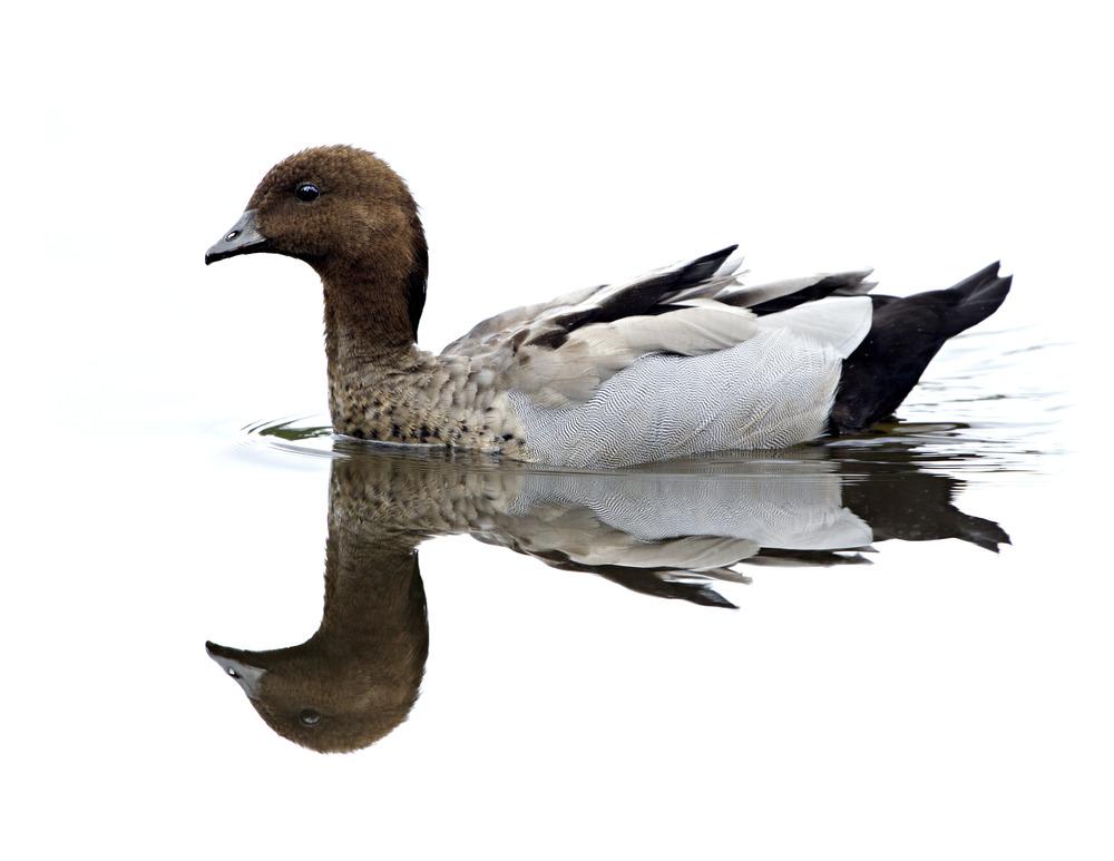 Wetlands walk: Jerrabomberra Wetlands, Dairy Road Fyshwick